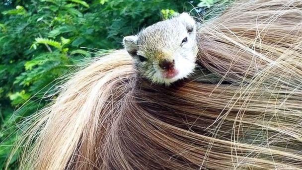 Ecureuil coiffure