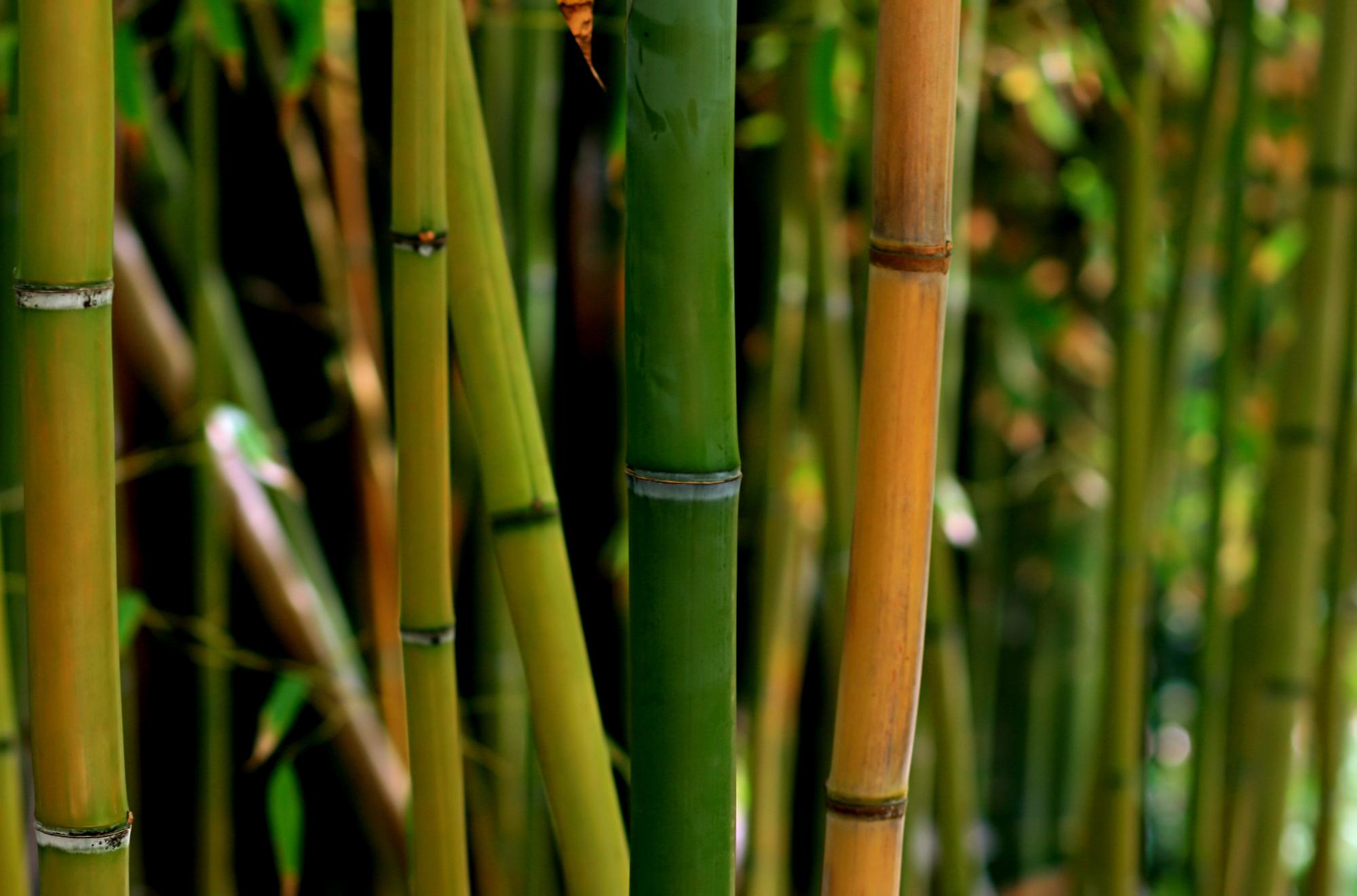 Bambou produit coiffure