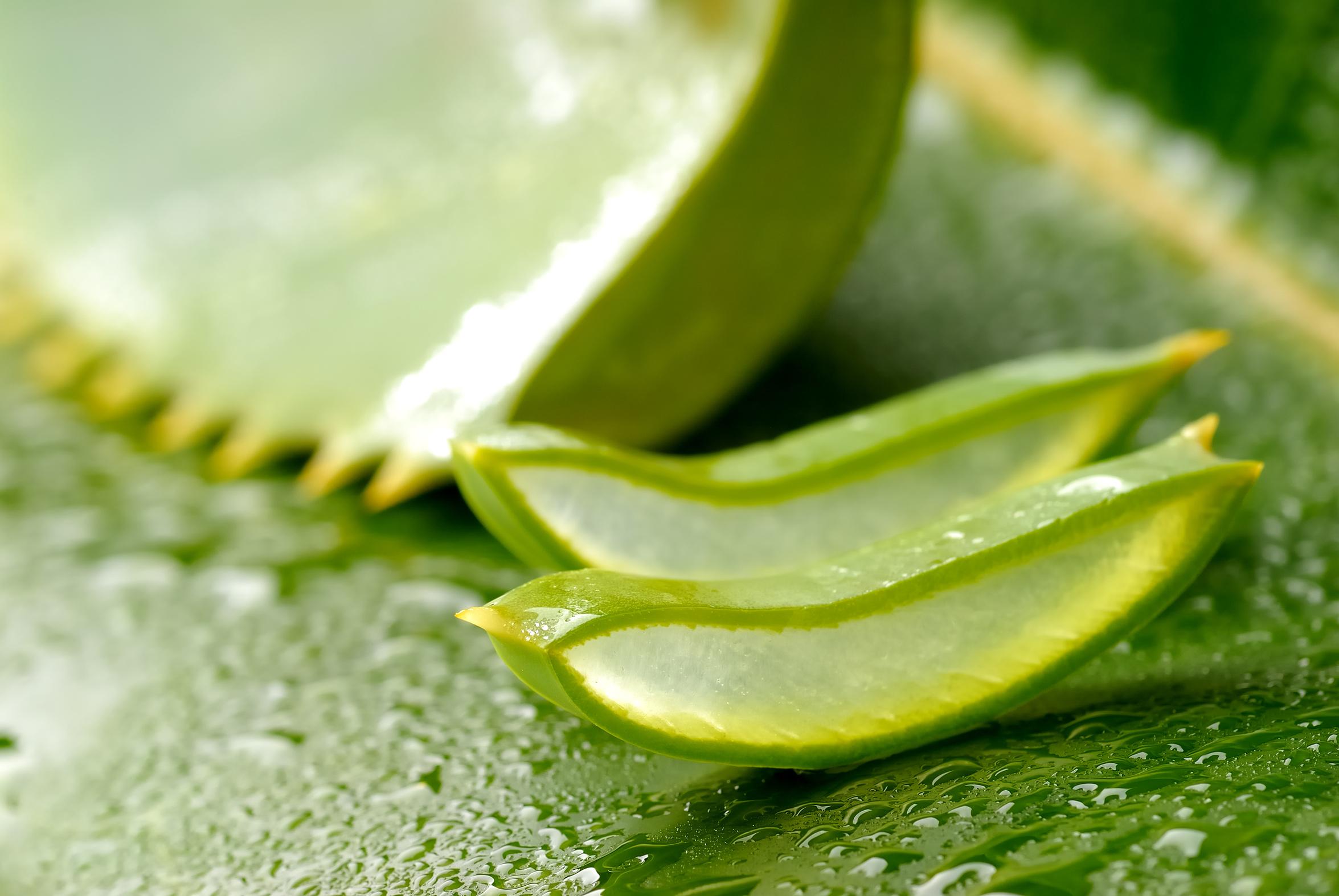Aloe vera soin naturel chute cheveux