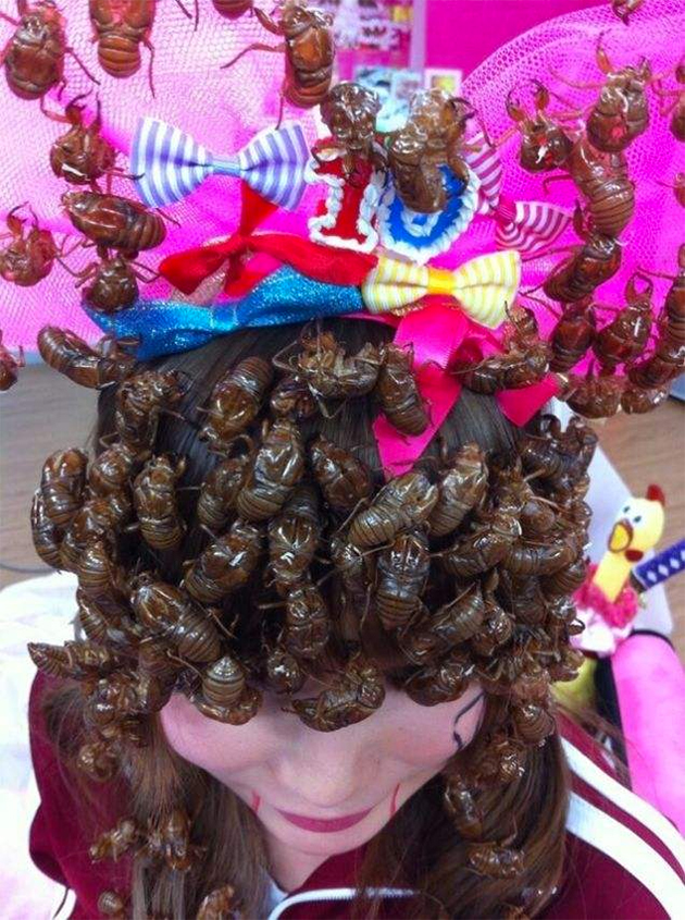Coiffure insectes