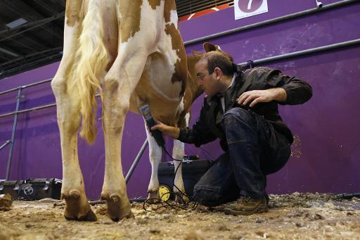 Coiffeur vaches salon de l'agriculture